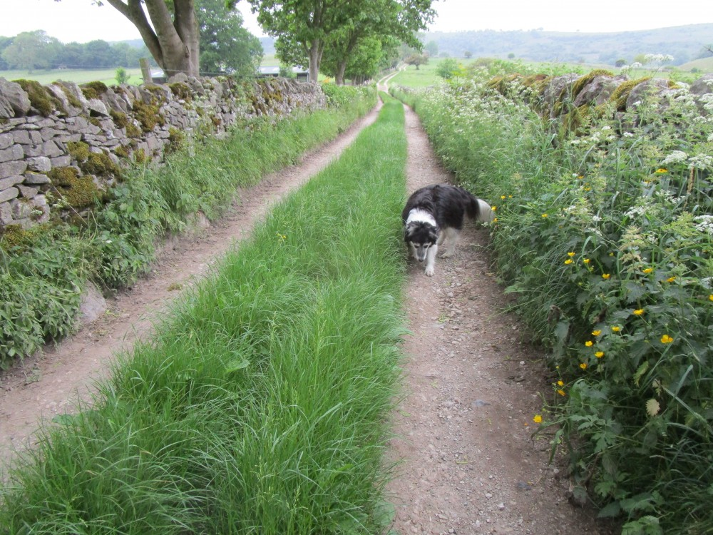 Longstone Moor dog walk and dog-friendly pub, Derbyshire - White Peak dog walk and dog-friendly pub