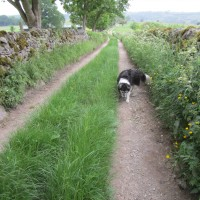 Great Longstone dog walk and dog-friendly pub, Derbyshire - White Peak dog walk and dog-friendly pub