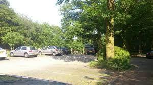 Woodland dog walk and dog-friendly pub, Essex - Woodland dog walk in Essex.jpg
