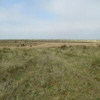 A149 dog walk, beach and dog-friendly pub, Norfolk - Norfolk dog-friendly beaches and pubs.JPG