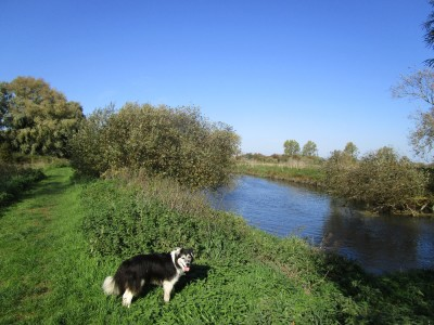Upstreet riverside dog walk from a dog-friendly pub, Kent - Driving with Dogs