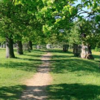 Country park dog walks near Harlow, Hertfordshire - Hertfordshire dog walking places.png