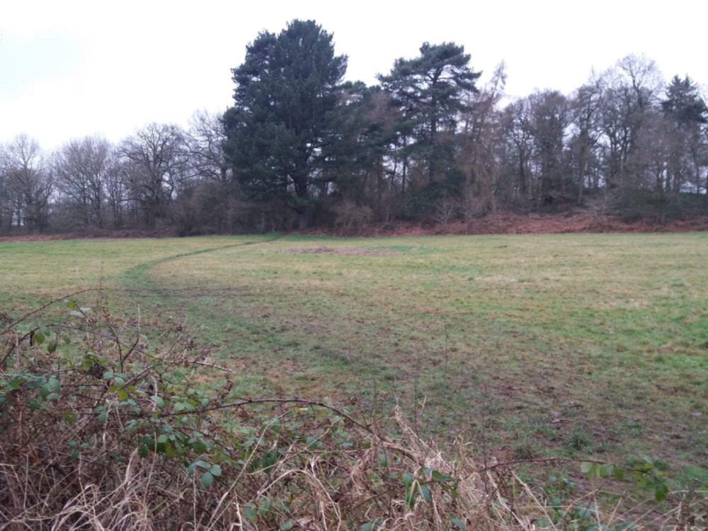 Just off the A50, beautiful pool, meadow, and option for long dog walks, Leicestershire - 218239C7-55AC-4AA6-BDA8-A2B4B48588D0.jpeg
