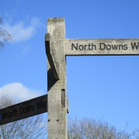 A281 North Downs Way dog walk, Surrey - Surrey dog walks.JPG