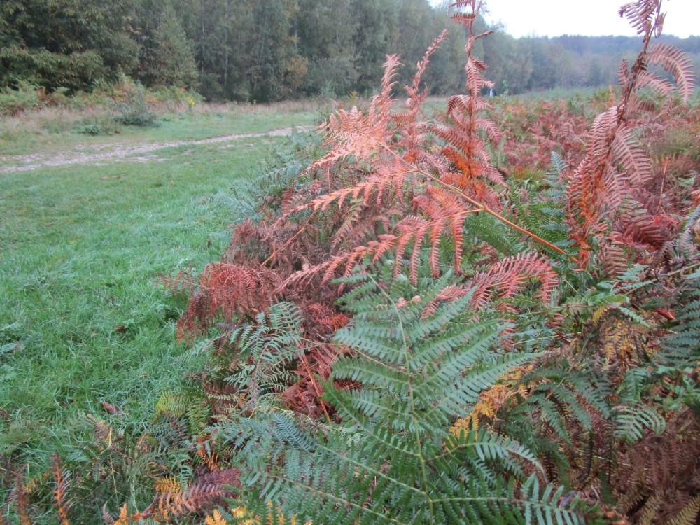 M20 Junction 9 Woodland dog walk, Kent - Dog walks in Kent