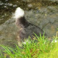 A39 Secret woodland wander doggiestop, Devon - Devon dog walk places.JPG