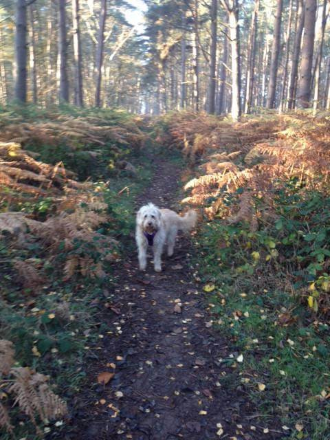 A46 - Oversley Woods dog walk - Alcester, Warwickshire - IMG_0500.JPG