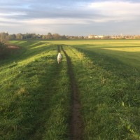 Best dog walk in York (River Ouse/Clifton Ings), Yorkshire - Dog walks in Yorkshire