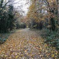 M27 Junction 8 coastal walk near Southampton, Hampshire - Hampshire dog walk