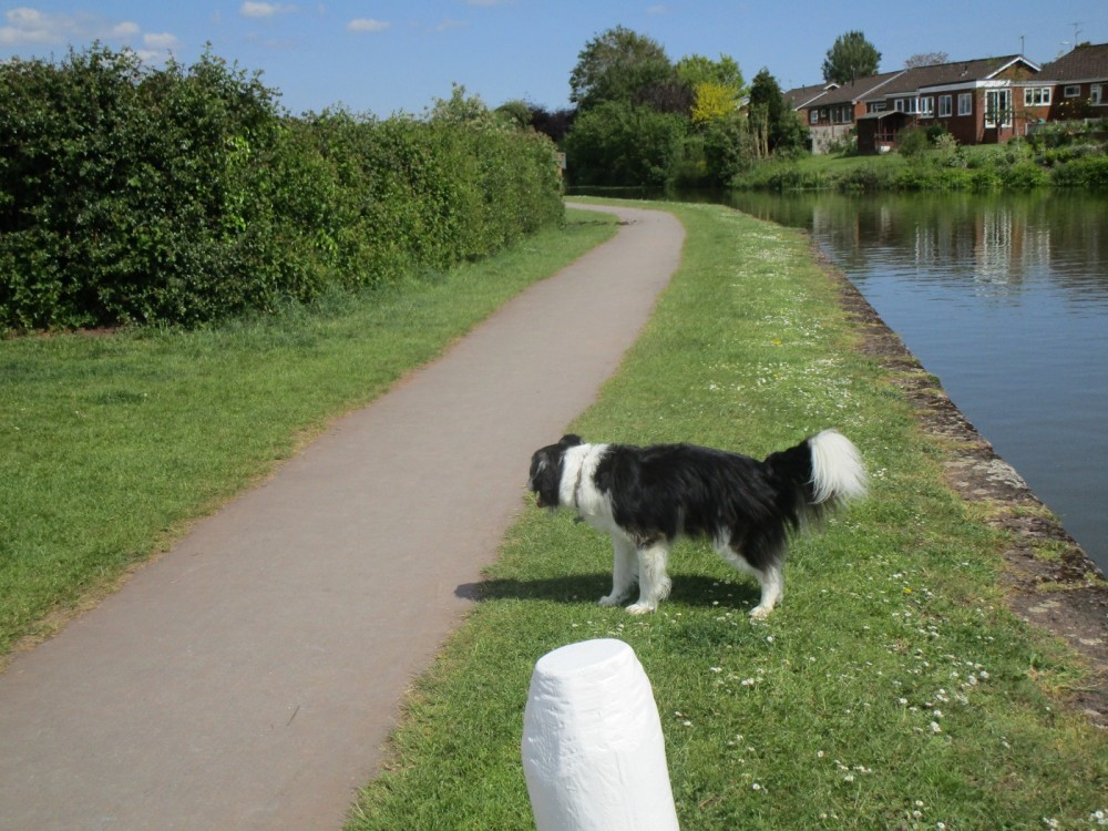 M5 Junction 29 dog walk and cafe near Tiverton, Devon - Devon dog walk and dog-friendly pub.JPG
