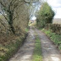 A21 dog-friendly pub and short walk near Lamberhurst, Kent - Kent dog-friendly pubs with dog walks.JPG