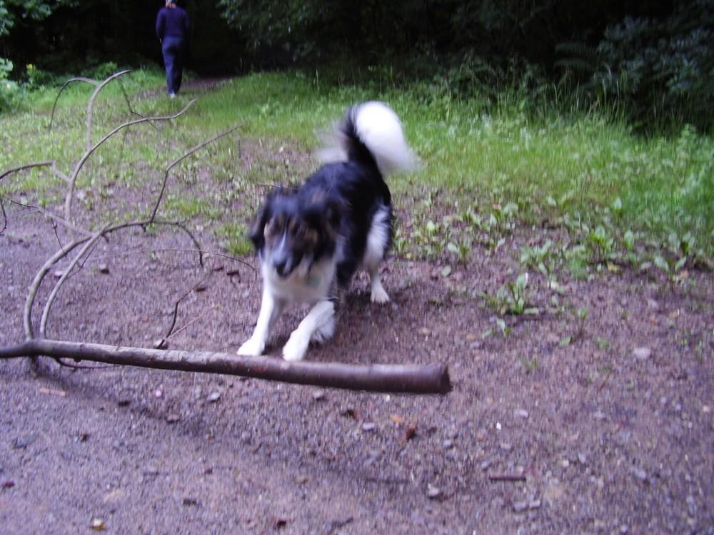 M4 dog-friendly pub and dog walk near Caerphilly, Wales - M4 dog walk and dog-friendly pub.JPG