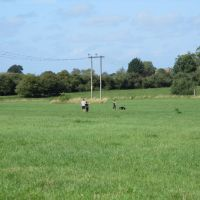 A419 dog walk near Swindon, Wiltshire - IMG_3137.JPG