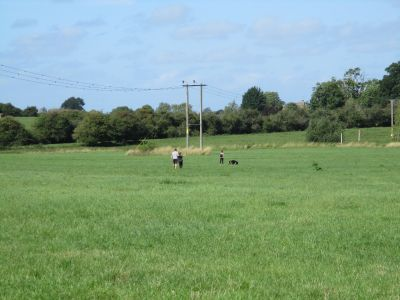 A419 dog walk near Swindon, Wiltshire - Driving with Dogs