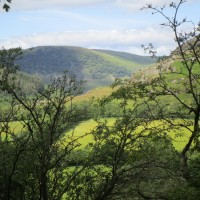 A470 Heritage nature walks near Rhayader, Wales - dog-friendly pubs and dog walks in Wales.JPG