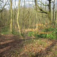 A25 woodland scramble and ramparts dog walk, Kent - IMG_0959.JPG
