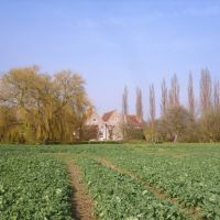 Dog-friendly inn and dog walk near Oxford, Oxfordshire - Dog walk near Oxford.jpg