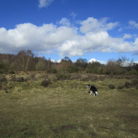 Big Common dog walks, Staffordshire - Dog walks in Staffordshire