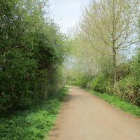 Lakes Country Park easy dog walk, Cambridgeshire