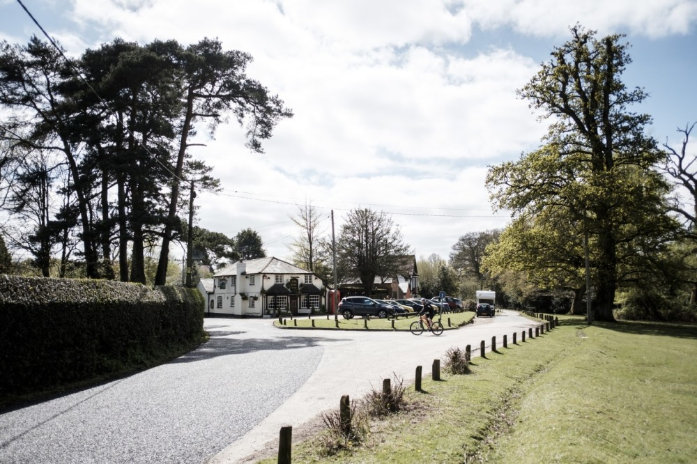 A35 New Forest dog walk and dog-friendly pub, Hampshire - Hampshire dog-friendly pub and dog walk