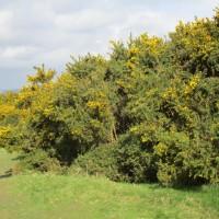 Forest dog walk near Crowborough, East Sussex - East Sussex dog walks.JPG