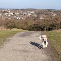 M62 J.7 Dog Walk at Sutton Manor Woodlands (The Dream Sculpture), Merseyside - IMG_20180224_143844_1.jpg