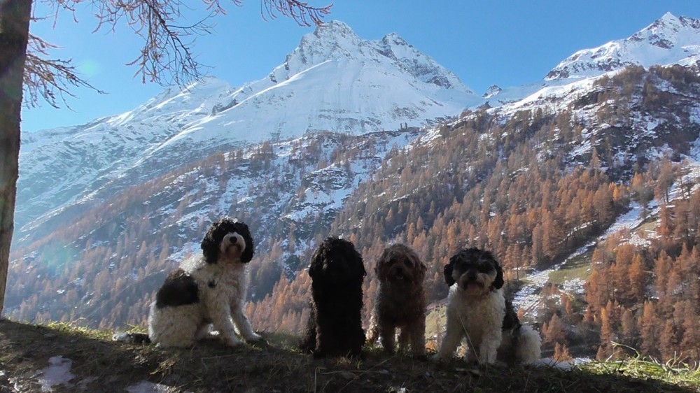 Paws on Piste - A Short Guide to Taking Fur Babies to the Slopes
