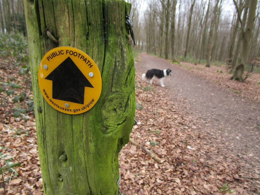 A286 country park dog walk, West Sussex - Sussex dog-friendly pub and dog walk.JPG
