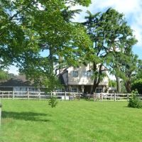 M25 Jct 5 dog-friendly pub with dog walk, Essex - Dog-friendly pub and walk near the M25 Essex.jpg