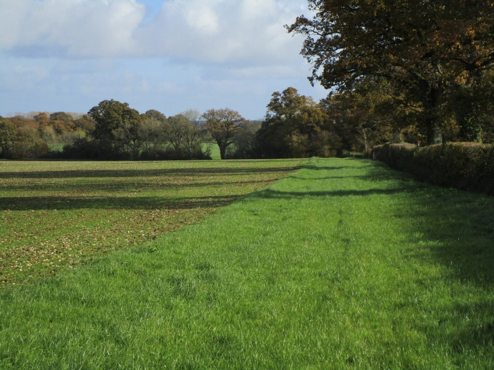 A37 dog-friendly dining and dog walk, Dorset - IMG_6291.JPG
