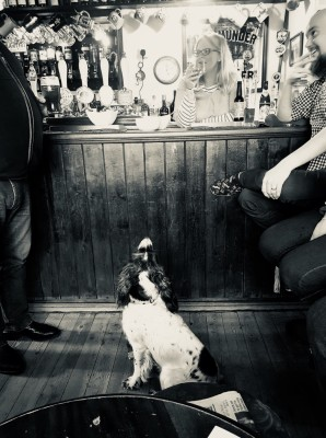 The Bell at Pensax, Worcestershire - Driving with Dogs