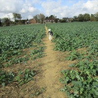 A274 pretty village dog-friendly pub and dog walk, Kent - Kent dog-friendly pubs with dog walks