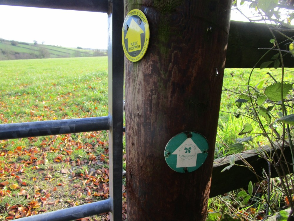 A37 dog-friendly inn and dog walk between Yeovil and Dorchester, Dorset - IMG_6305.JPG