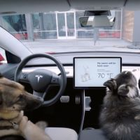 Safe Driving with Dogs in the car.jpg