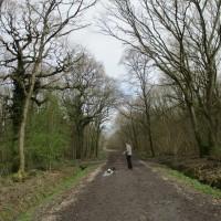 A350 woodland dog walk near Westbury, Wiltshire - Wiltshire woodland dog walks.JPG