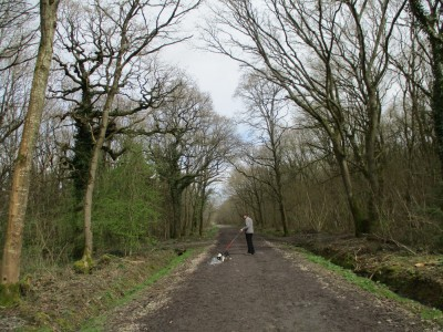 A350 woodland dog walk near Westbury, Wiltshire - Driving with Dogs