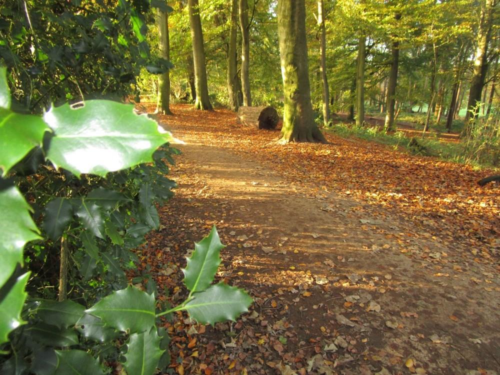 A35 Country Park dog walk with dog wash, Dorset - IMG_6346.JPG