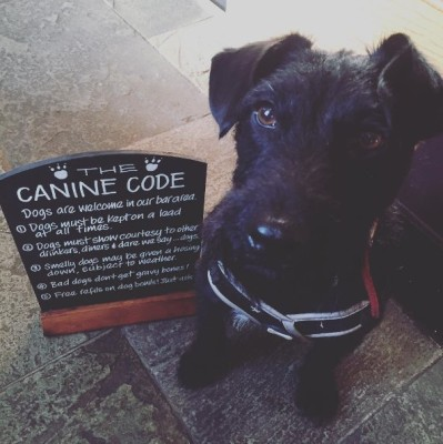 M56 dog-friendly pub, Cheshire - Driving with Dogs