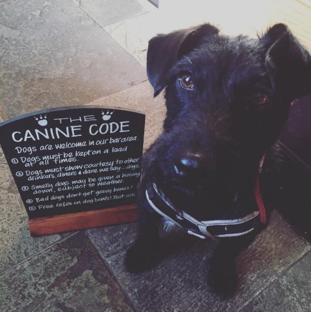 M56 dog-friendly pub, Cheshire - Cheshire dog-friendly pubs and dog walks.jpg