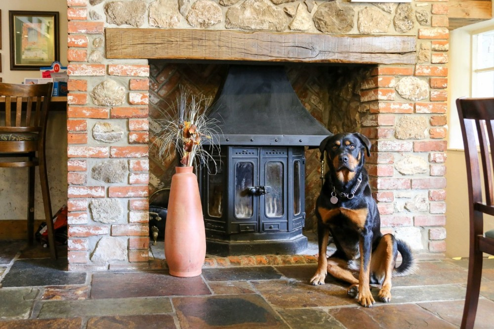 A30 dog walk and dog-friendly pub, Somerset - Somerset dog friendly pub and dog walk