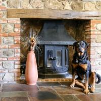A30 dog walk and dog-friendly pub, Somerset - Somerset dog friendly pub and dog walk