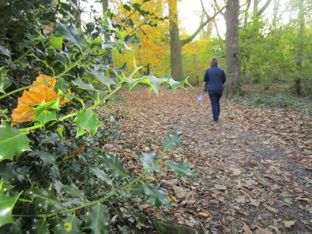 A35 woodland dog walk and literary trail, Dorset - IMG_6511.JPG