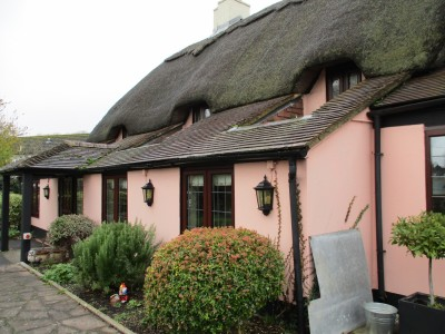 A354 dog walk and dog-friendly inn, Dorset - Driving with Dogs