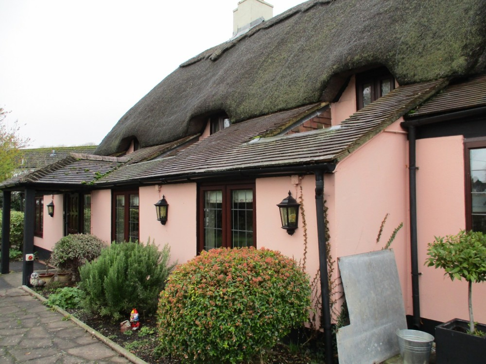 A354 dog walk and dog-friendly inn, Dorset - IMG_0487.JPG