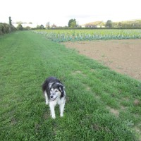 M20 Junction 11 dog-friendly inn and dog walk, Kent - Kent dog walks and dog-friendly pubs