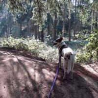 Woodland dog walk with loads of paths, Norfolk - 70440EC0-0A22-425A-8788-FA0C360E1FC4.jpeg
