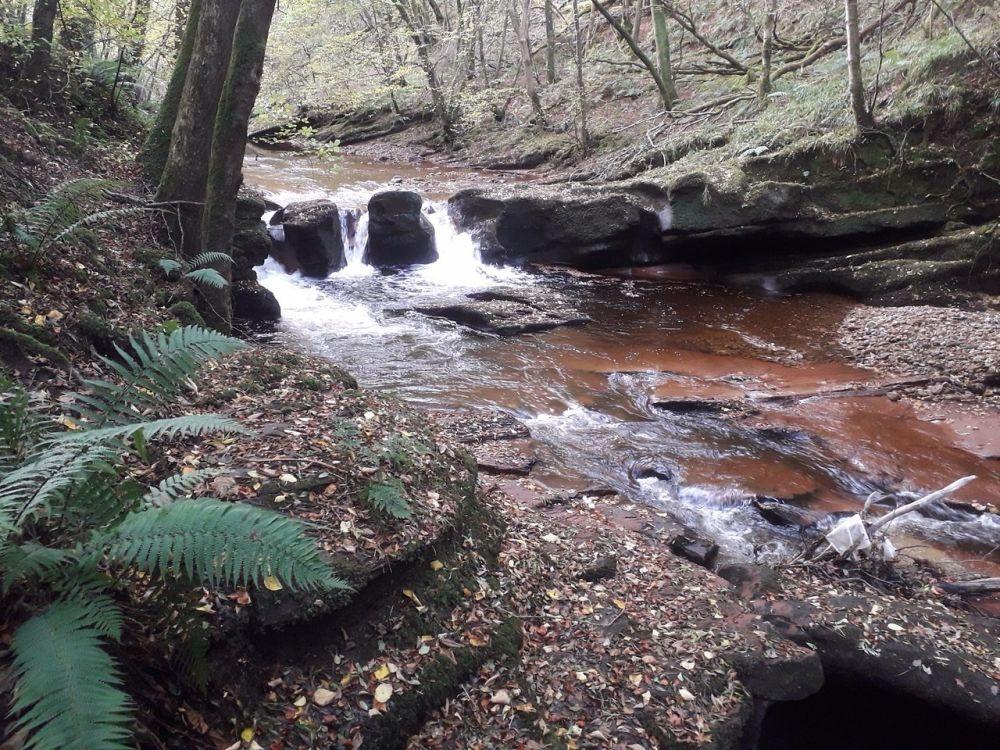 A69 woodland dog walks with splashing river, Cumbria - Cumbria dog walk