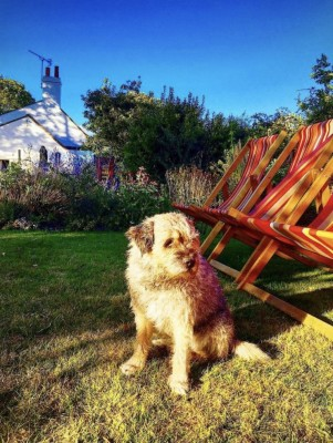 Dog-friendly pub near Selsey, West Sussex - Driving with Dogs