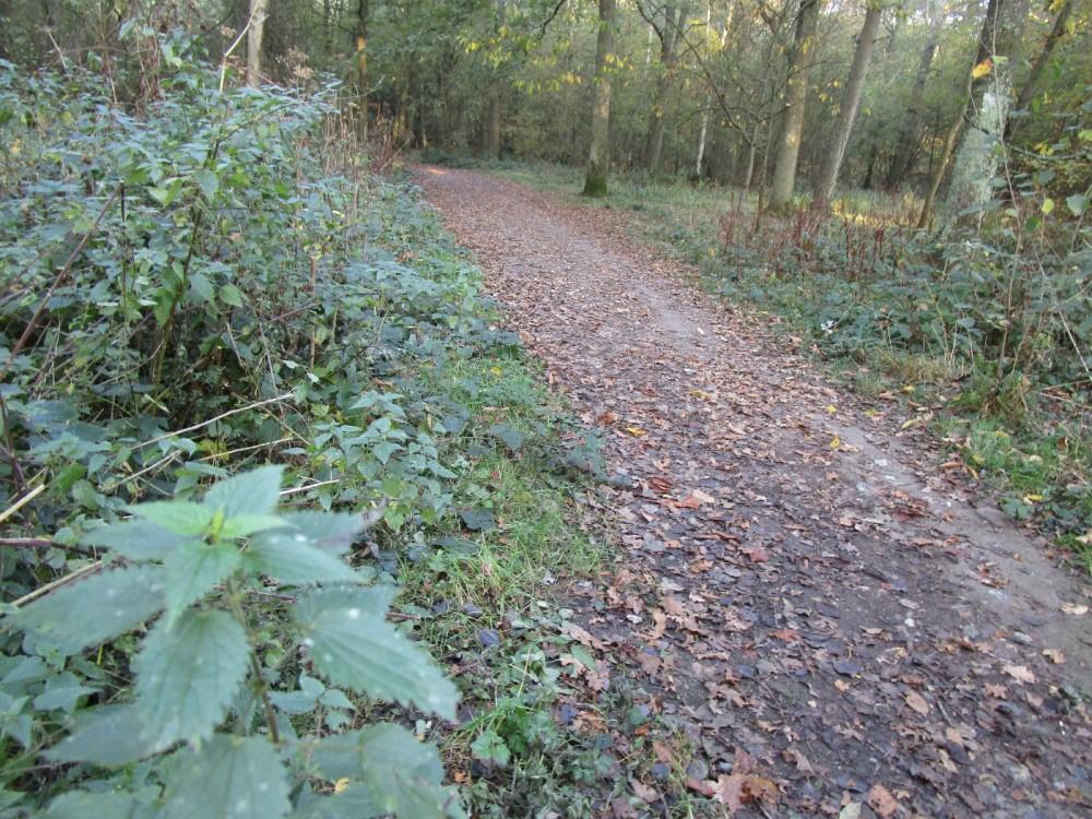 Quiet Forest dog walks, Kent - Kent dog-friendly pubs with dog walks