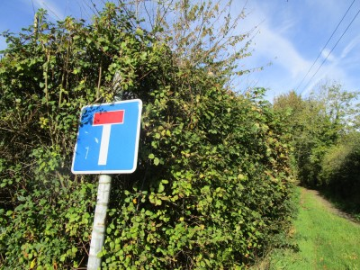 Dog-friendly pub and dog walks near Canterbury, Kent - Driving with Dogs